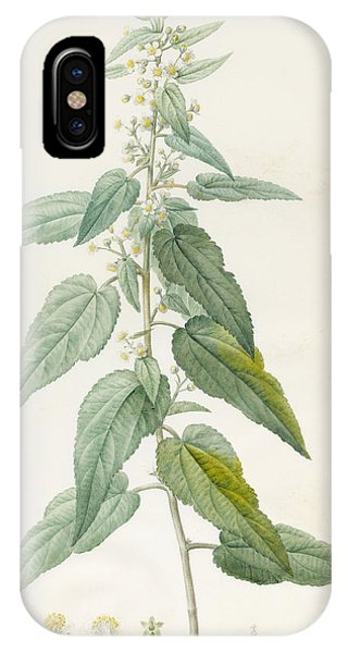 Flora iPhone Case - Sida Pulchella by Pierre Joseph Redoute