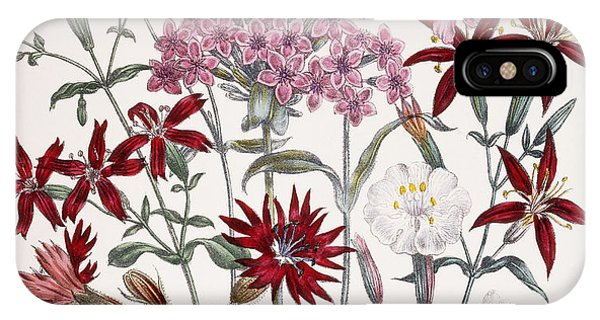Flora iPhone Case - Silene by Jane Loudon
