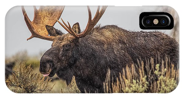 Silly Moose  IPhone Case