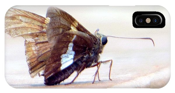 Silver Spotted Skipper Butterfly IPhone Case