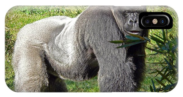 Silverback IPhone Case