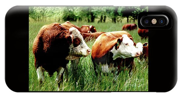 Simmental Bull And Hereford Cow IPhone Case