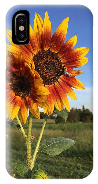Sunflower  Beauty IPhone Case