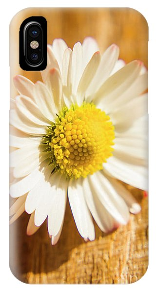 Close-up iPhone Case - Simple Camomile  In Sunlight by Jorgo Photography - Wall Art Gallery