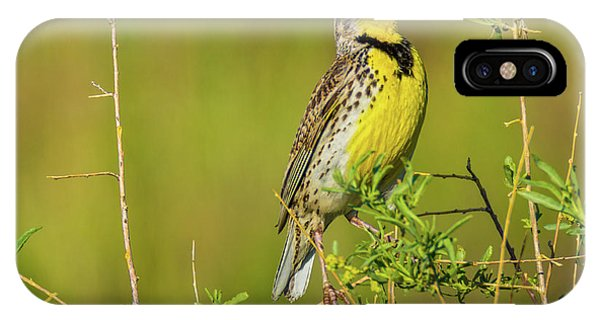 IPhone Case featuring the photograph Sing A New Song by John De Bord