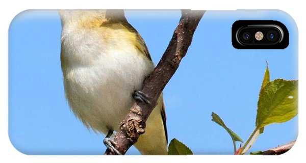 Singing Vireo IPhone Case