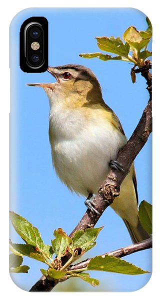 Singing Red-eyed Vireo IPhone Case