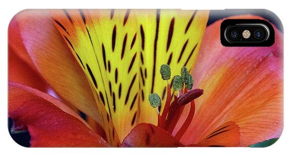 Single Alstroemeria Inca Flower-1 IPhone Case