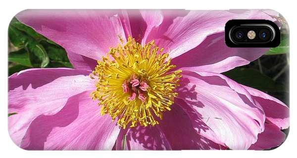 Single Pink Peony IPhone Case
