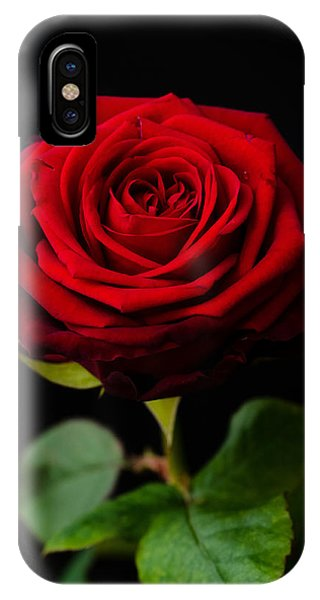 Single Rose IPhone Case