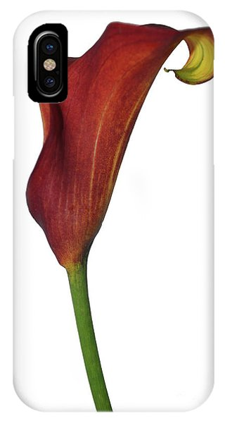 Single Rust Calla Lily Stem IPhone Case