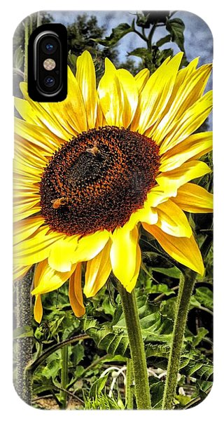 Single Sunflower IPhone Case