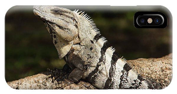 Sir Iguana Mexican Art By Kaylyn Franks IPhone Case