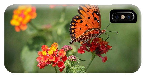 Agraulis Vanillae iPhone Case - Sitting Pretty Gulf Fritillary Butterfly by Reid Callaway