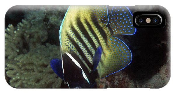 Six Banded Angelfish, Great Barrier Reef IPhone Case