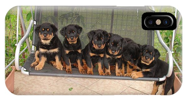 Six Rottweiler Puppies Lined Up On A Swing IPhone Case