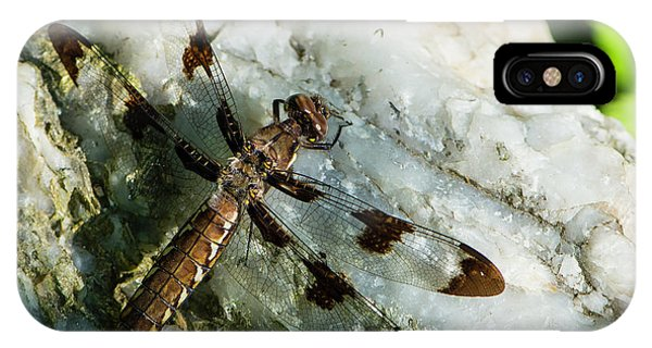 Six Spotted Dragonfly IPhone Case