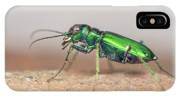 Six-spotted Tiger Beetle Phone Case by Derek Thornton