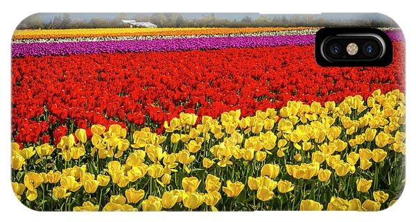 Skagit Valley Tulips  IPhone Case