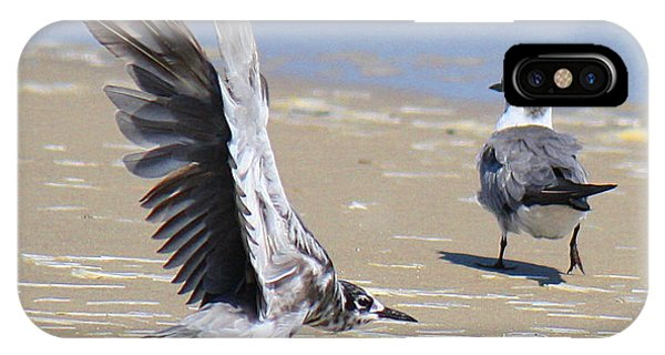 Skiddish Black Tern IPhone Case