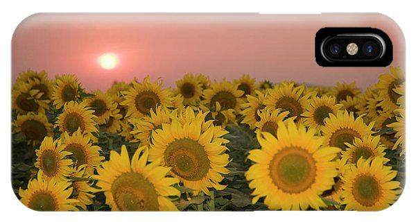Skn 2179 Sunflower Landscape IPhone Case