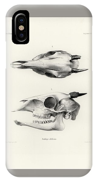 IPhone Case featuring the drawing Skull Of A Bush Duiker, Sylvicapra Grimmia by J D L Franz Wagner