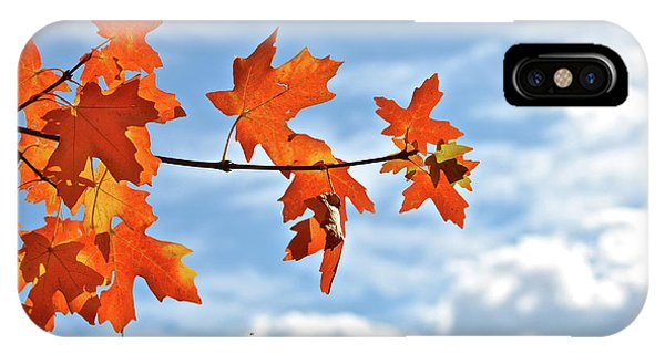 Sky View With Autumn Maple Leaves IPhone Case