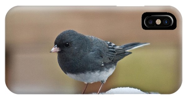 Slate Junco Feeding In Snow IPhone Case