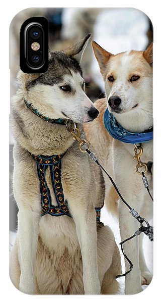 Sled Dogs IPhone Case
