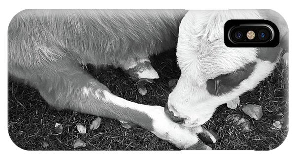 Sleeping Calf Bw IPhone Case