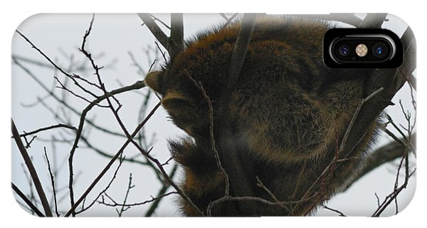 Sleeping Coon IPhone Case