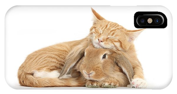 Sleeping On Bun IPhone Case