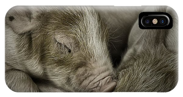 Sleeping Piglet IPhone Case