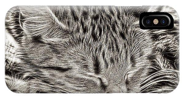 Alive iPhone Case - Sleeping Tabby by Tom Gowanlock