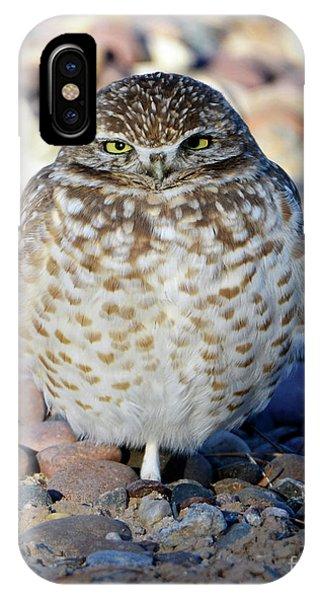 Sleepy Burrowing Owl IPhone Case