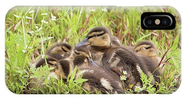 Sleepy Ducklings IPhone Case