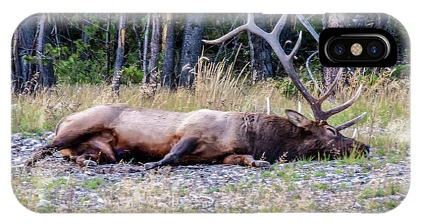IPhone Case featuring the photograph Sleepy Elk 2009 03 by Jim Dollar
