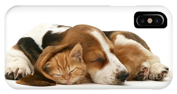 Sleepy Ginger Pals IPhone Case