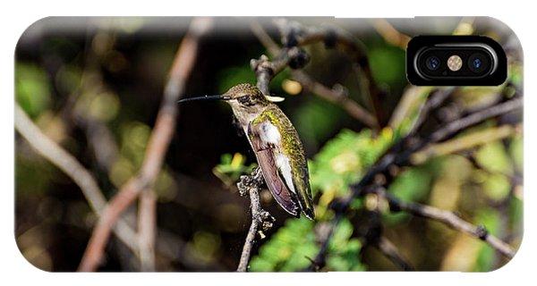 Sleepy Hummingbird IPhone Case