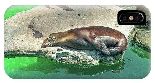 Sleepy Sea Lion IPhone Case