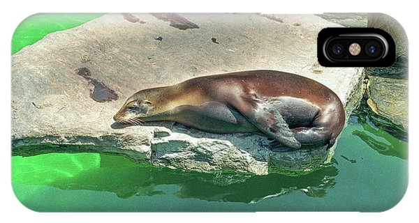 Sleepy Sea Lion IPhone Case