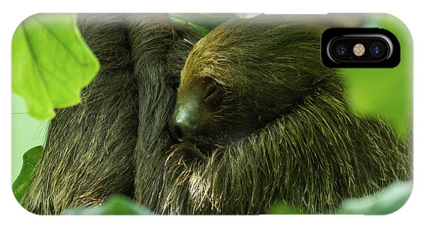 Sloth Sleeping IPhone Case