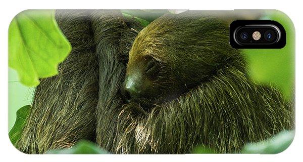 Sloth Sleeping IPhone Case