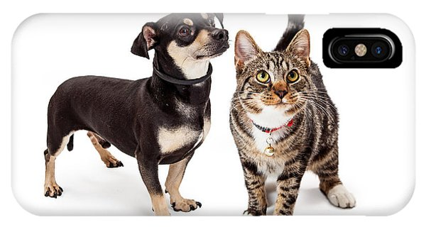 Small Dog And Cat Looking Up Together IPhone Case