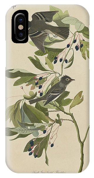 Small Green-crested Flycatcher IPhone Case