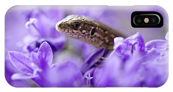 IPhone Case featuring the photograph Small Lizard by Jaroslaw Blaminsky
