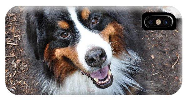 Bernese Mountain Dog iPhone Case - Smiling Bernese Mountain Dog by Pelo Blanco Photo
