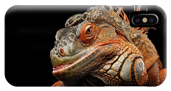 smiling Orange iguana isolated on black  IPhone Case