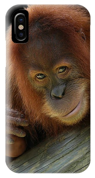 Cute Young Orangutan IPhone Case