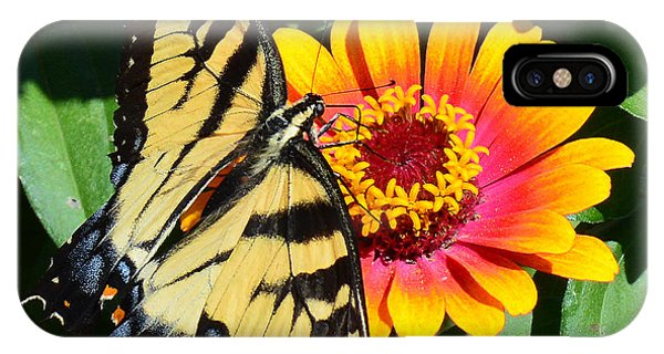 Snacking Tiger Swallowtail Butterfly IPhone Case